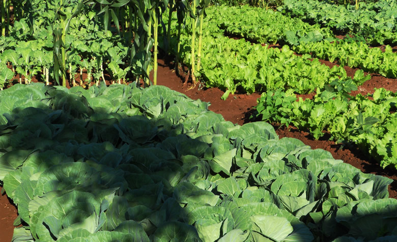 garden farm